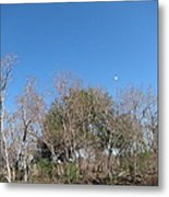 New Orleans - Swamp Boat Ride - 121271 Metal Print by DC Photographer