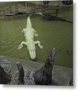 New Orleans - Swamp Boat Ride - 12129 Metal Print