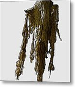 New Photographic Art Print For Sale   Day Of The Dead Skeleton On A Stick Metal Print