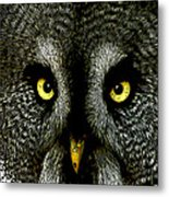 New Photographic Art Print For Sale   Great Grey Owl Metal Print