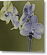 New Photographic Art Print For Sale Orchids 10 Metal Print