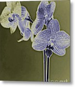 New Photographic Art Print For Sale Orchids 9 Metal Print