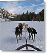 Riding Through The Colorado Snow On A Husky Pulled Sled Metal Print