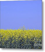 New Photographic Art Print For Sale Yellow English Fields 2 Metal Print