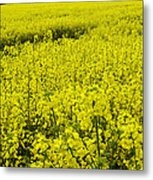 New Photographic Art Print For Sale Yellow English Fields 4 Metal Print