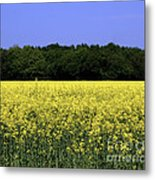 New Photographic Art Print For Sale Yellow English Fields Metal Print