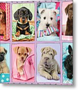 New Puppy Multipic Metal Print by Greg Cuddiford
