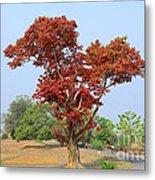 New Spring Leaves On Tree  Metal Print