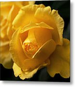 New Yellow Rose Metal Print
