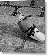 New York City Pigeon In Black And White Metal Print