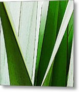 New Zealand Flax Simplified Metal Print