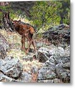 Newborn Elk Calf Metal Print