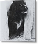 Newfoundland Puppy Metal Print