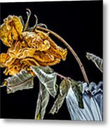 News From Up The Street Metal Print