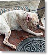 Newsworthy Dog In French Quarter Metal Print