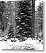Next Season Christmas Trees Metal Print