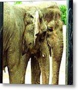 Niabi Asian Elephants Metal Print