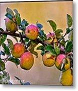 Nice Apples  Metal Print