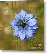 Nigella Damascena Metal Print