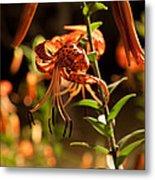 Night Bloom II Metal Print
