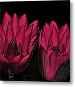 Night Blooming Lily 2 Of 2 Metal Print