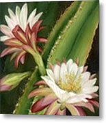 Night Cereus Metal Print by Summer Celeste