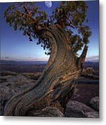 Night Guardian Of The Valley Metal Print