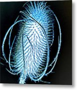 Night Teazle Metal Print