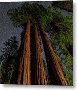 Night View Of Giant Sequoia Trees Metal Print