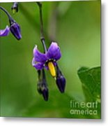 Nightshade Metal Print