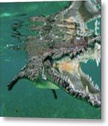 Nino The Croc Metal Print