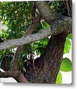 Nispero Tree Metal Print