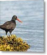 No Bird Is An Island Metal Print