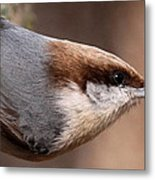 No Hands - Fayetteville - Nuthatch Metal Print