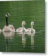 Geese Family Metal Print