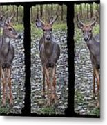 Curious Yearling Deer Metal Print