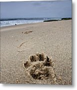 No Maw But I Got A Paw Metal Print by Peter Tellone