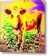No Mercy For The Cow, They Say, But Why Not  Metal Print