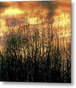 Noble Grasses Metal Print