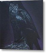 Noble Raven Metal Print