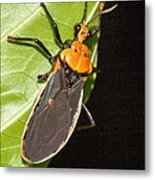 Nocturnal Bug Metal Print