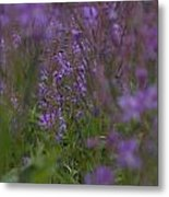 nodding fireweed Netherlands Metal Print