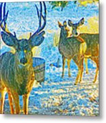 Nomad - Little Dollop And Rudi Metal Print