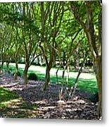 Norfolk Botanical Garden 3 Metal Print