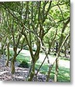 Norfolk Botanical Garden 7 Metal Print