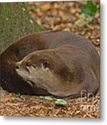North American River Otter Metal Print