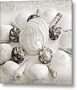 North Carolina Circle Of Sea Shells Bw Metal Print