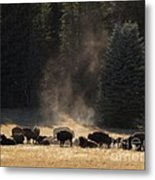 North Rim Bison Of The Grand Canyon Metal Print