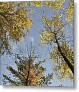 North Woods In The Fall Metal Print
