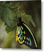 Northern Butterfly Metal Print